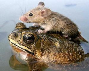 animal-altruism02