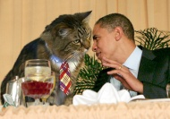 1-cat-obama-meet-1389760444537-copia