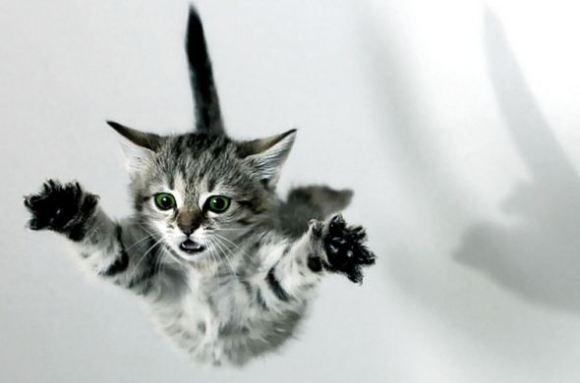 caduta-gattook-copia